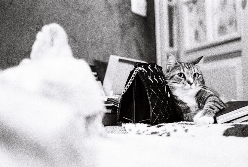 5 Frames... Of Cats that will (apparently) save film forever (Yasuhara T981, Nikon Nikkor H.C. 5cm F/2 + Kodak TRi-X 400) - by Aivaras Sidla
