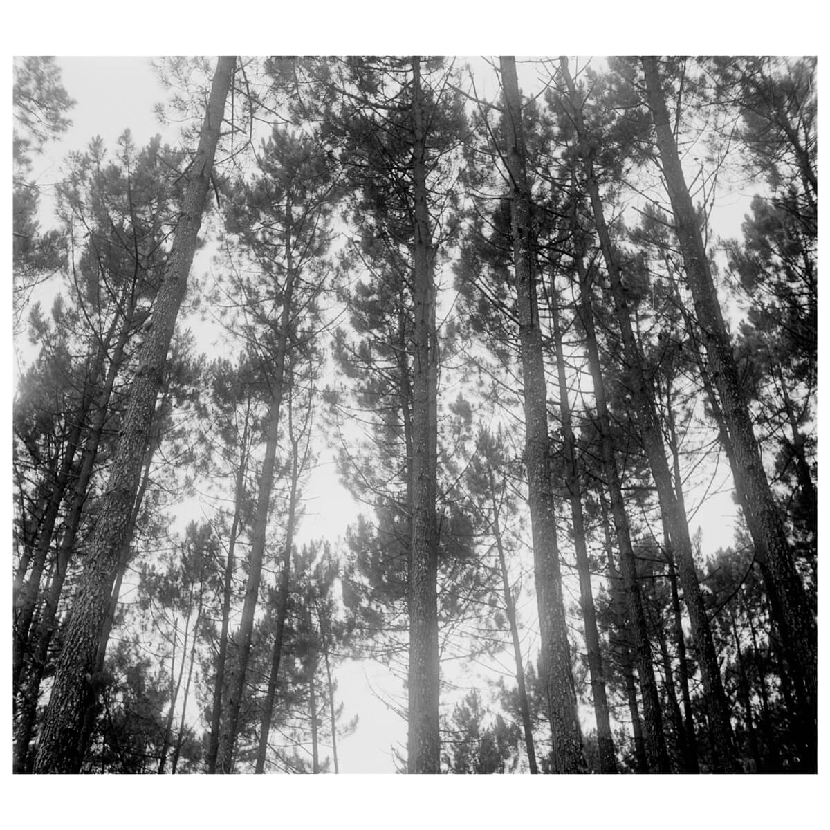5 Frames... Of a foggy forest on an English TLR and Kodak Tri-X 400 (120 Format / EI 400 / MPP Microcord MKII + 77.5mm f/3.5 Ross Xpres) - by Leo Nikishin