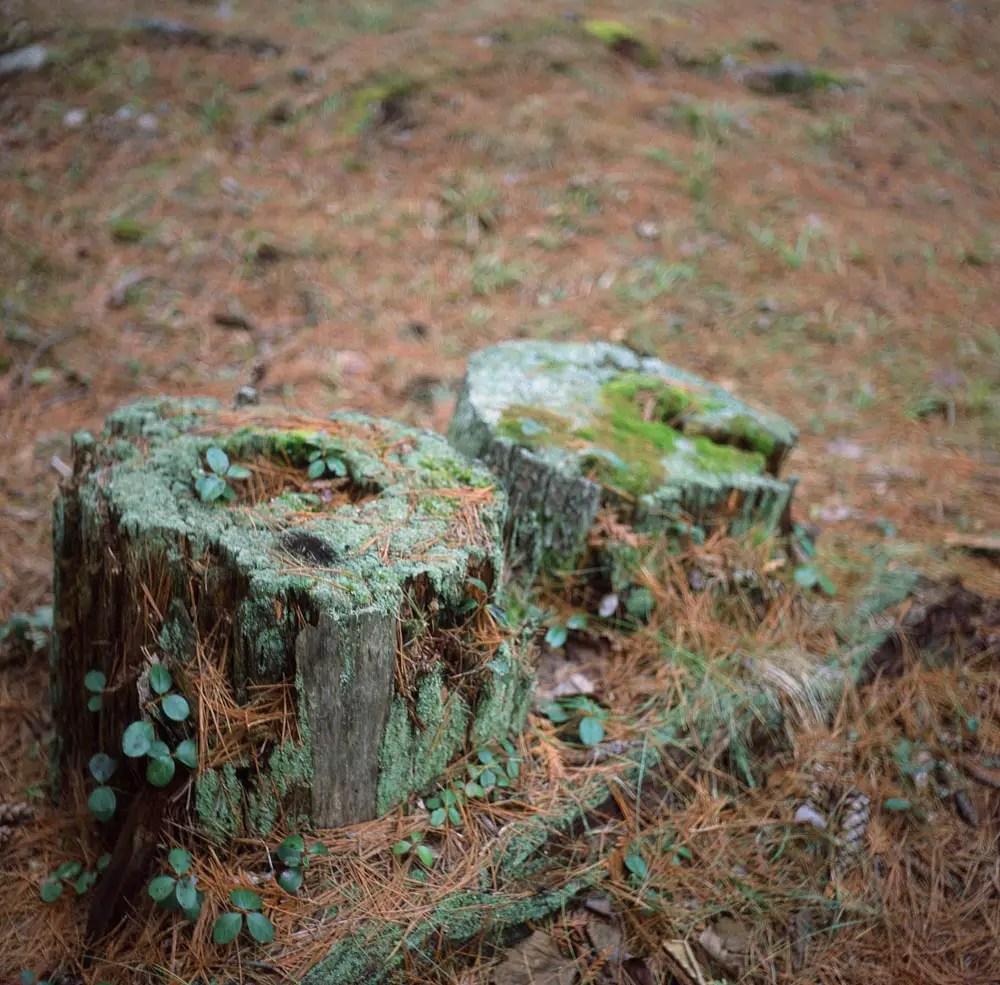 Mossy Stumps - Fujifilm Provia 100F + Rolleicord III, f/3.5  1/15