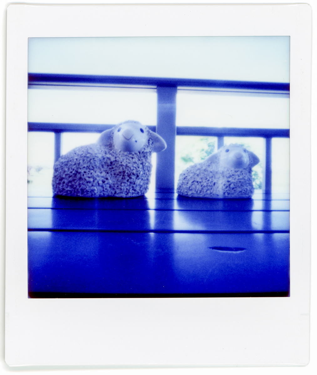 Table Sheep - Lomography Diana Instant Square and Fujifilm Instant Square film
