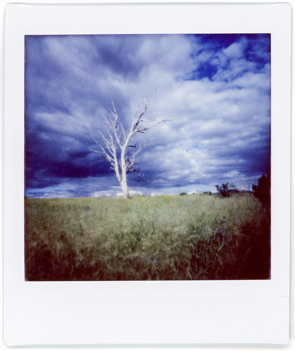 Tree Field - Lomography Diana Instant Square and Fujifilm Instant Square film