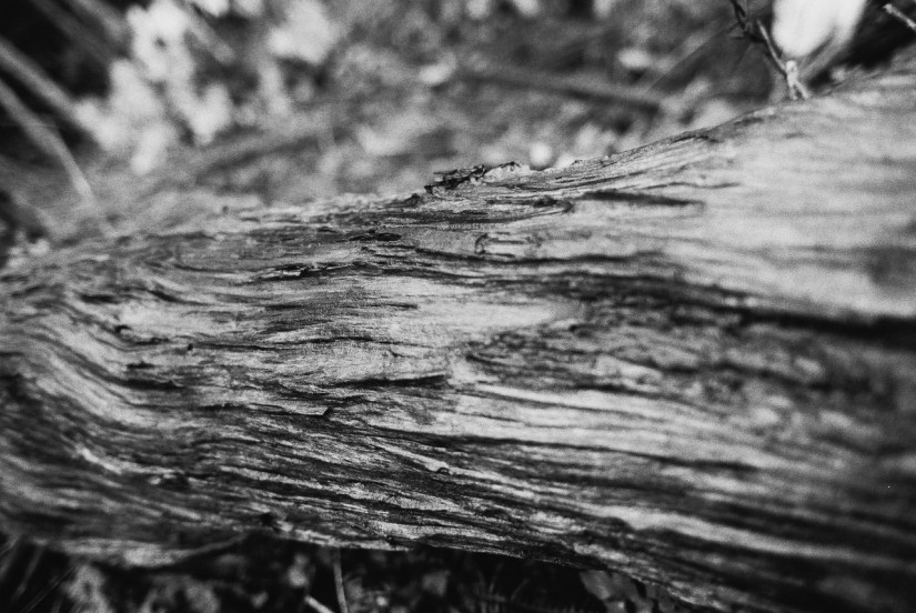 Torsion - Eastman Double-X 5222 shot at EI 1600. Black and white motion picture film in 35mm format. Push processed 2+2/3 stops.