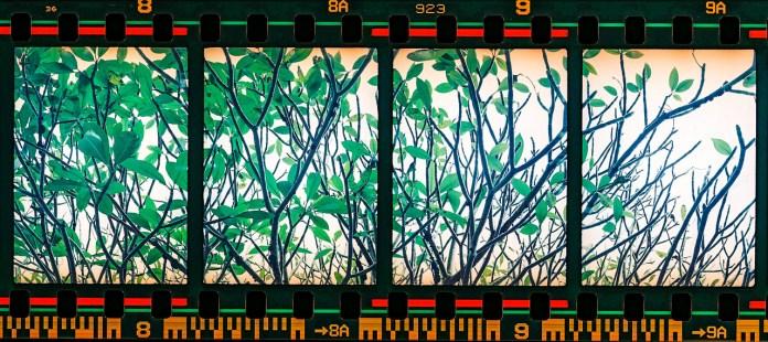 Quadriptych - Shot on Fujicolor Industrial 400 at EI 400. 35mm color negative film shot as half frame