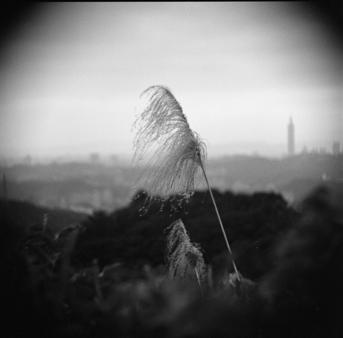 Wispy Rollei Infrared 400 shot at EI 400. Black and white negative film in 120 format shot as 6x6.