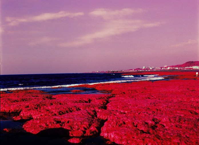 Red Algae - Shot on Kodak AEROCHROME III 1443 at EI 400. Color infrared aerial surveillance film in 120 format shot as 6x6. Shot with #21 orange filter.