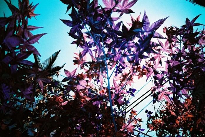 Purple Flare - 2015-06-24 - LomoChrome Purple XR 100-400 at EI 400. Color negative film in 35mm format.