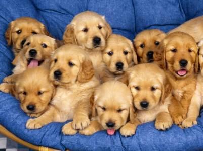 636255716038853209-720471366_cute-dog-labrador-retriever-photo-1