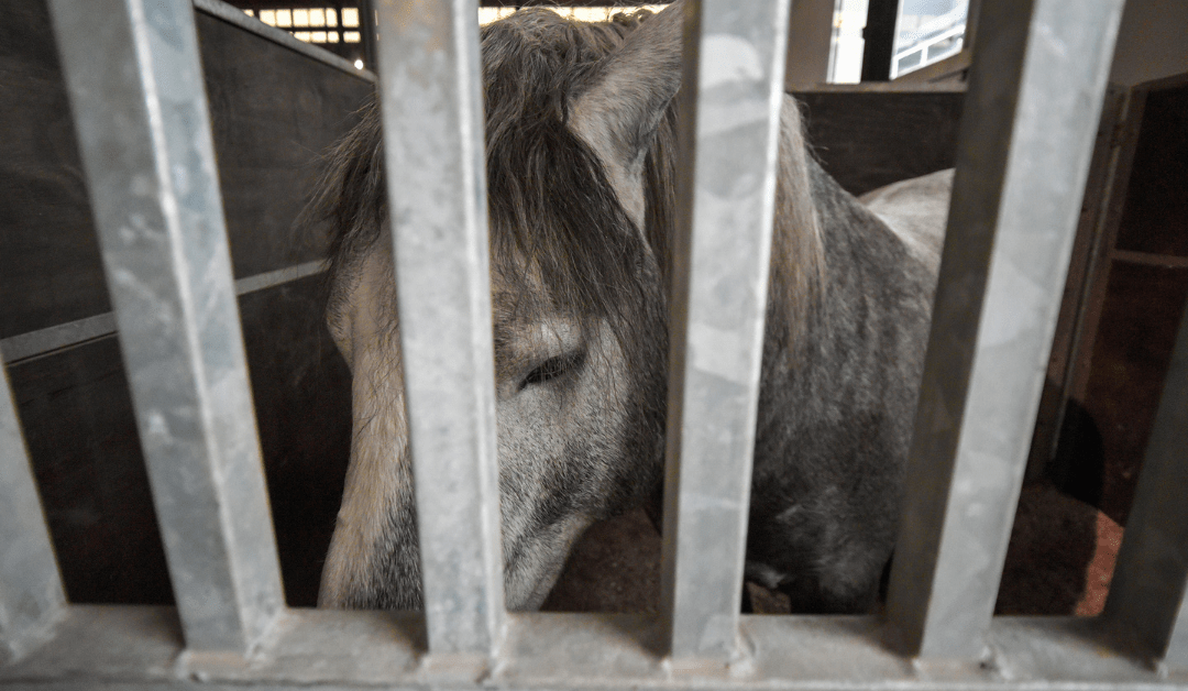 Horses kept in stables are stressed!