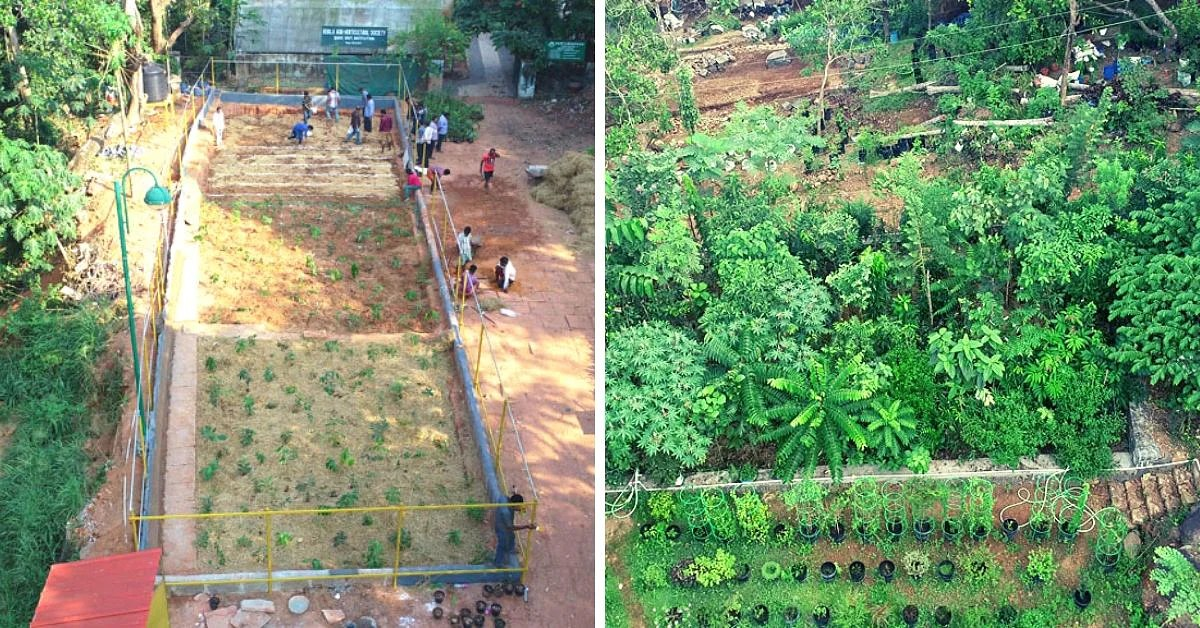 Recreating native forest with native trees miyawaki is the name of the japanese scientist, who… liked by atul dhotare. How To Grow A Forest Using The Miyawaki Method In Minimal Space