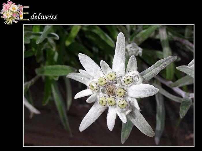 λουλούδι αλφάβητο