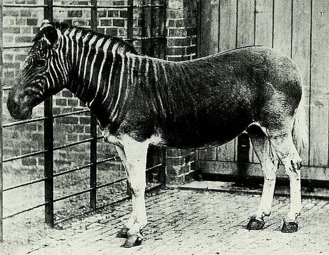 25 Unusual Photos of History