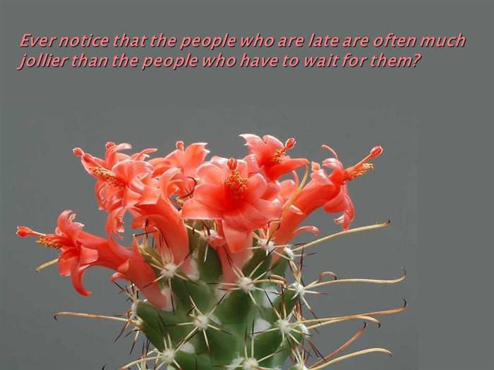 θετική πλευρά λουλούδια