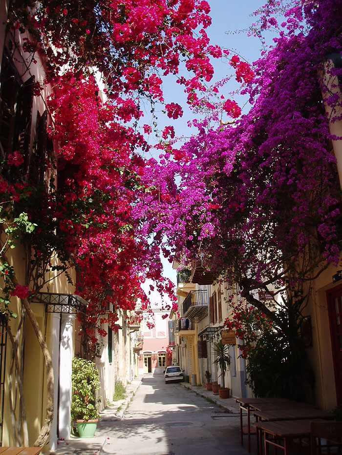 flowery streets