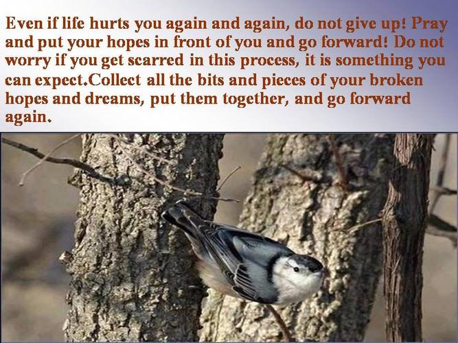 perseverance inspiring