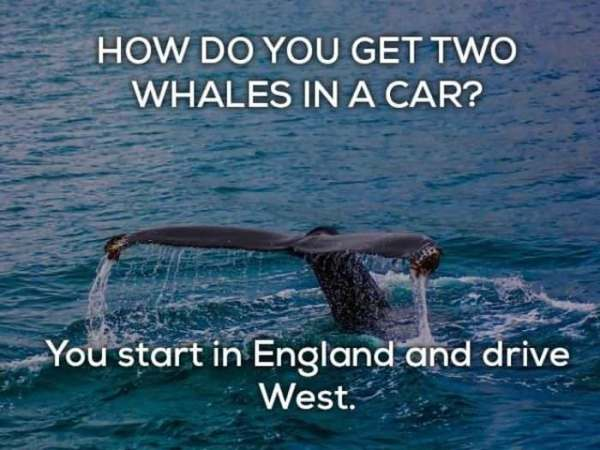 95 Hilariously Bad Jokes   Funny   BabaMail How do you get 2 whales in a car  You start in England and drive