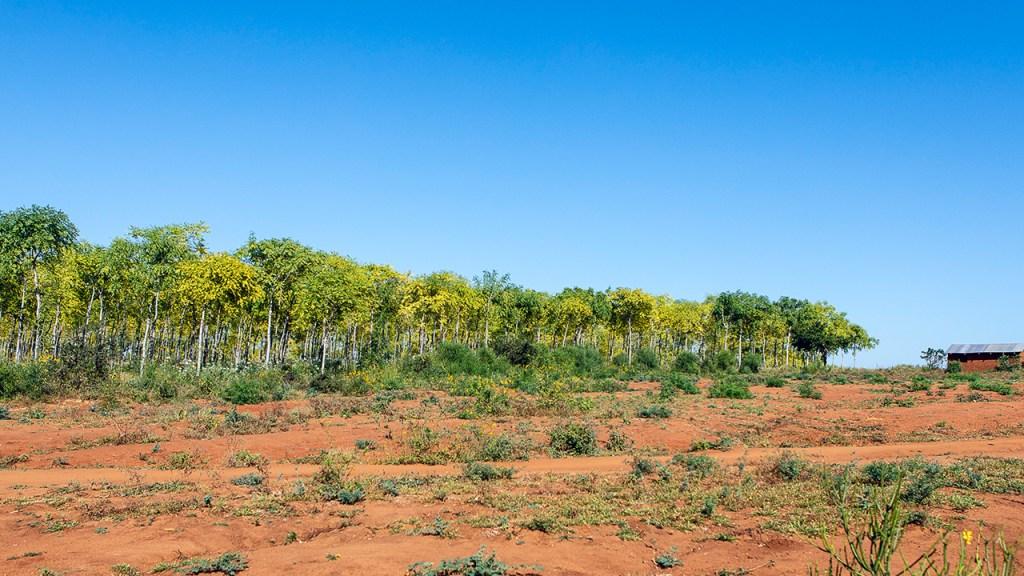 The border between the plantations and the semi-desert. Kiambere, Kenya. July 2018