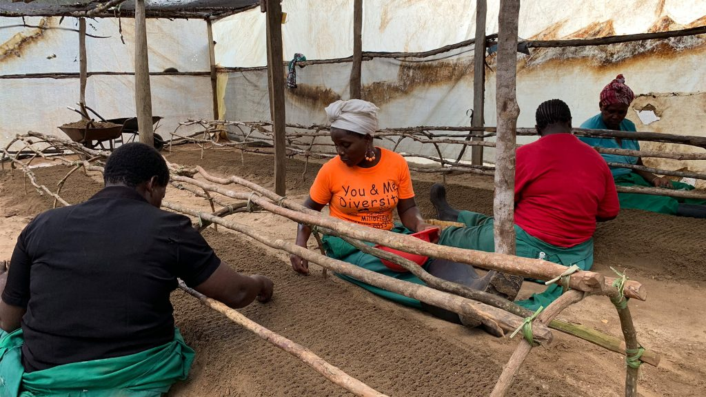 Workers at the plantation school busy filling up the rows with seeds. Photo: Torgny Johnsson