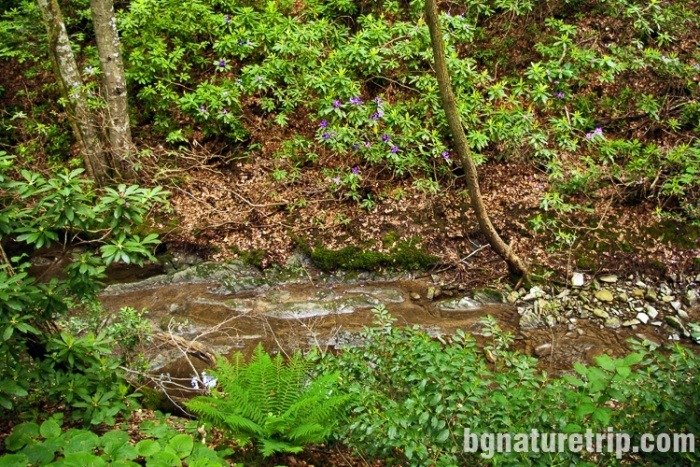 """Marina River, ( in the Bulgarian language """"Marina Reka"""") whose banks are covered with rare plants"""