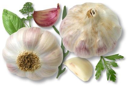 Garlic and Skin: Fungus, Dermatitis, Itching