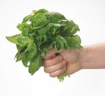 Recipes with Basil