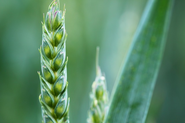 First Andalusian Center dedicated to the production of organic seeds