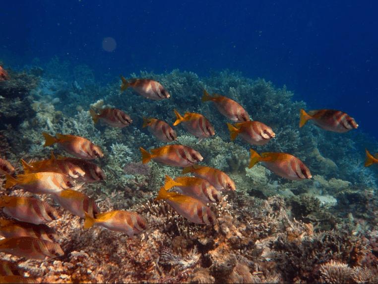 Palawan Island, Philippines: Coron Bay