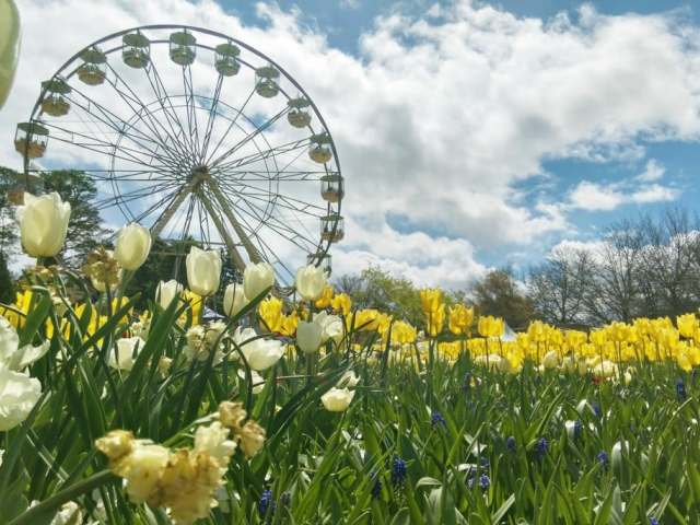 Spring in Australia: Where to Go and What to Do