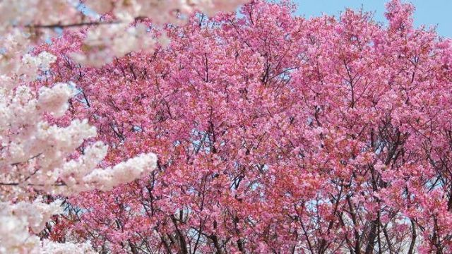 Taiwan Holiday in Spring: Top Activities, Sights & Hotels