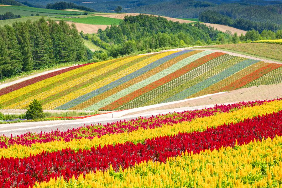 Japan's Most Beautiful Springtime Destinations: Wildflowers at Hokkaido