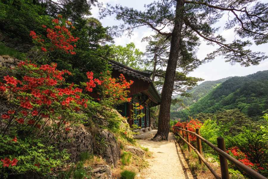 Odaesan National Park: Gangwon-do, South Korea (image via Shutterstock)