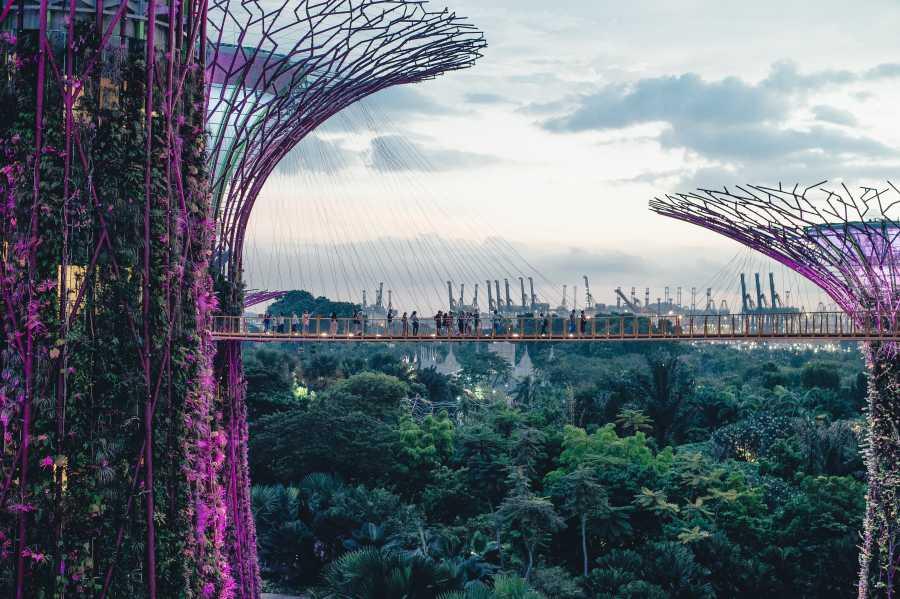 Gardens By The Bay (image via Unsplash)