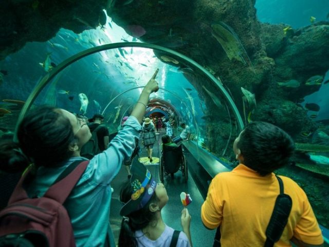 7 Things You Will Absolutely Love About The S.E.A. Aquarium