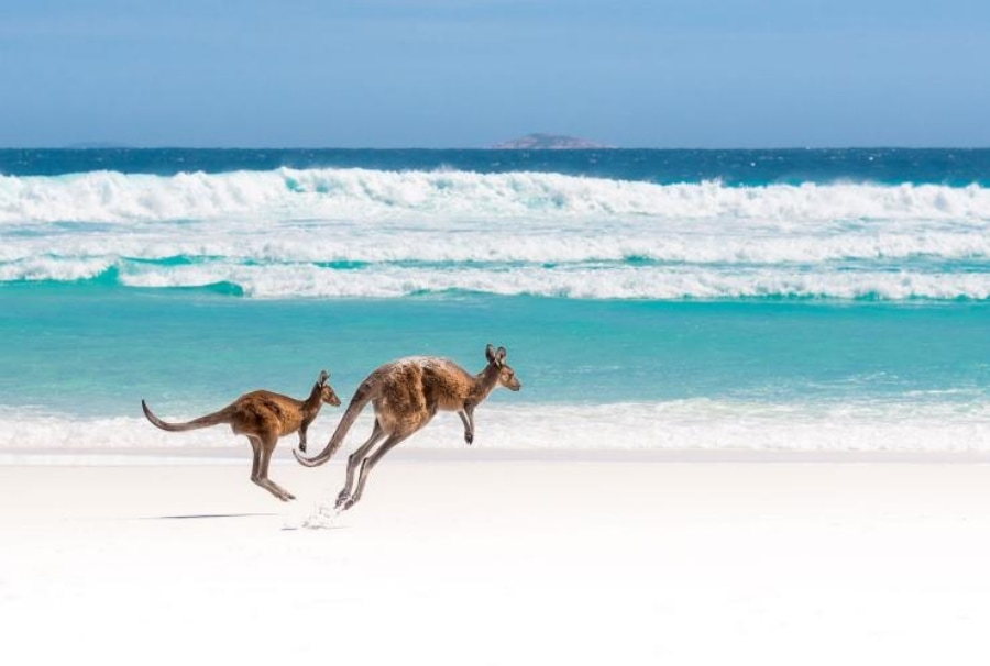 Australia beach as virtual background images for zoom