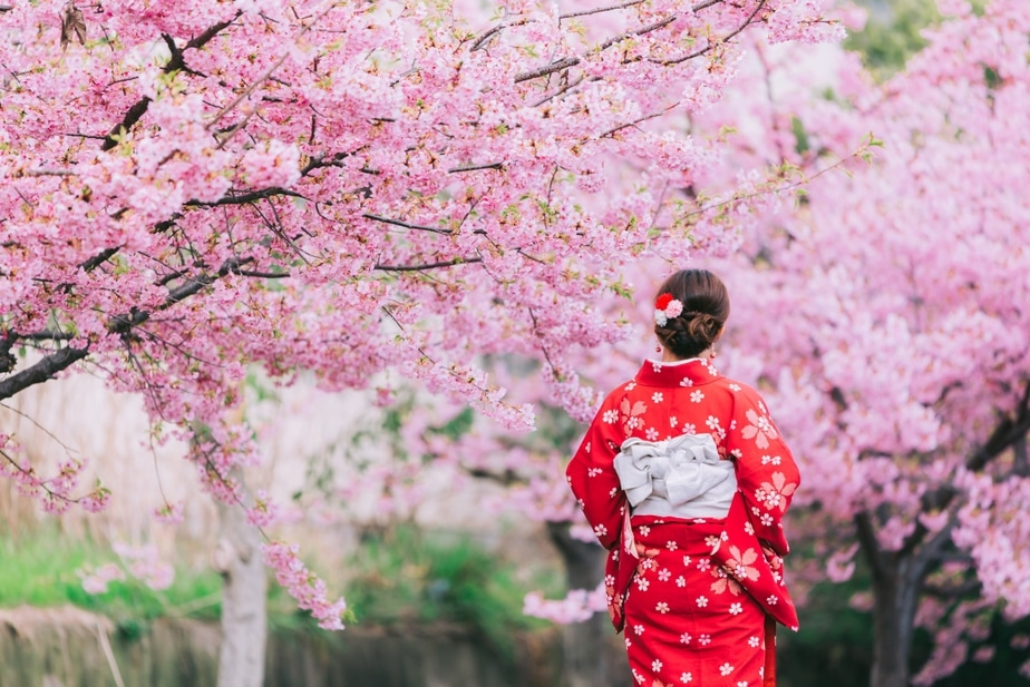 Cherry Blossoms In Japan When And Where To See Sakura This 2020