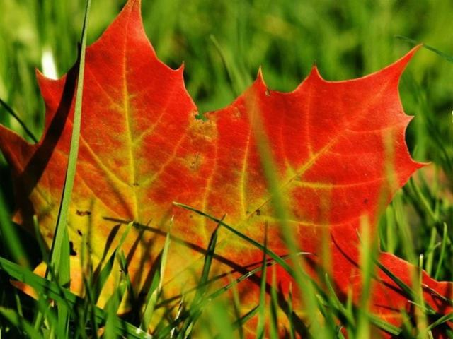 Autumn in Taiwan: Top 5 Places to See Maple Leaves