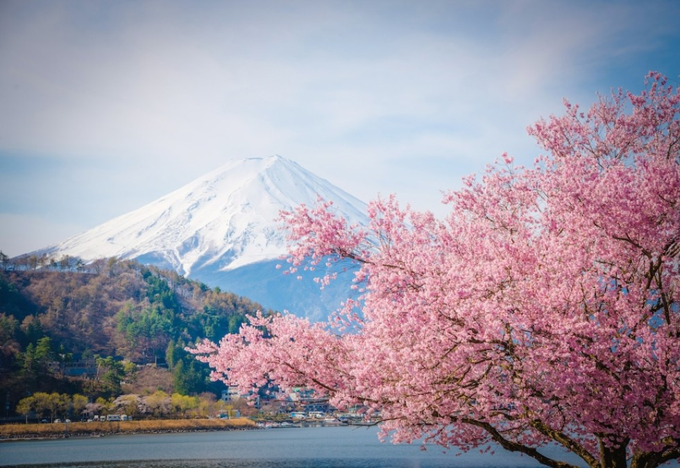 Where and When to See Sakura: Mt. Fuji