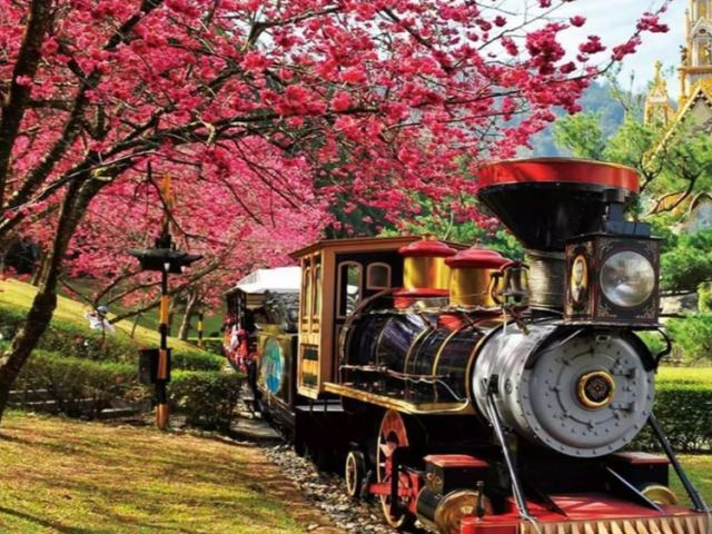 Nantou's Cherry Blossom Festival Is Coming Up and You Don't Want to Miss It