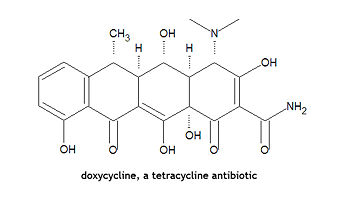 Doxycycline structure