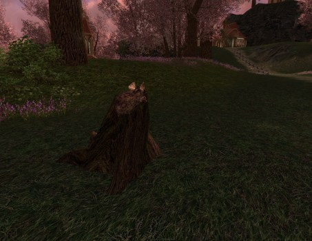 Maple Tree-stump