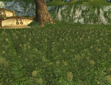 Large Pipeweed Field