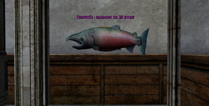 50-pound Salmon Trophy