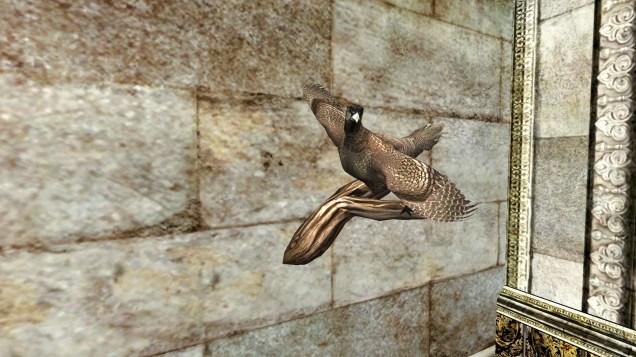 pheasant (10)