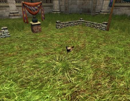 Small Hobnanigans Field with Scrapper Chicken
