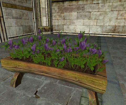Raised Planter of Purple Clover