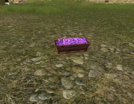 Raised Planter of Violets