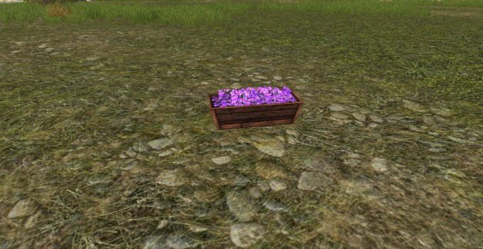 Raised Planter of Violets