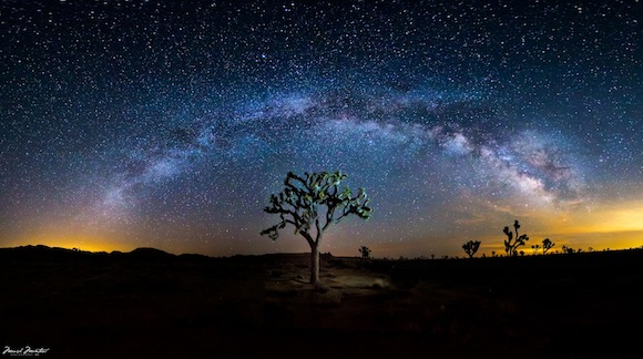 Milky Way Galaxy arching over a Joshua tree