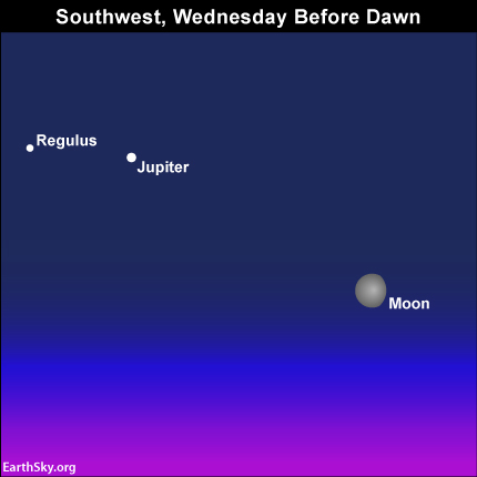 The moon, planet Jupiter and the star Regulus, the brightest star in the constellation Leo, light up the southwest sky before dawn.
