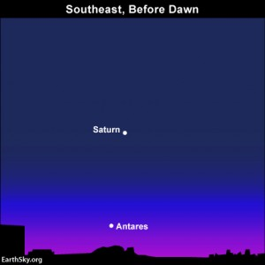 And look in the southeast before morning dawn to see the planet Saturn above the ruddy star Antares.