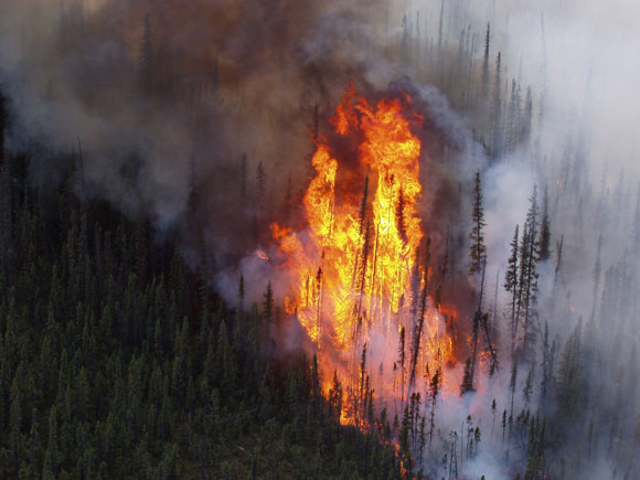 Trees engulfed in flames at the Tetlin National Wildlife Refuge in Alaska. Image Credit: U.S. Fish and Wildlife Service.